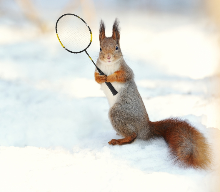 squirrelracket